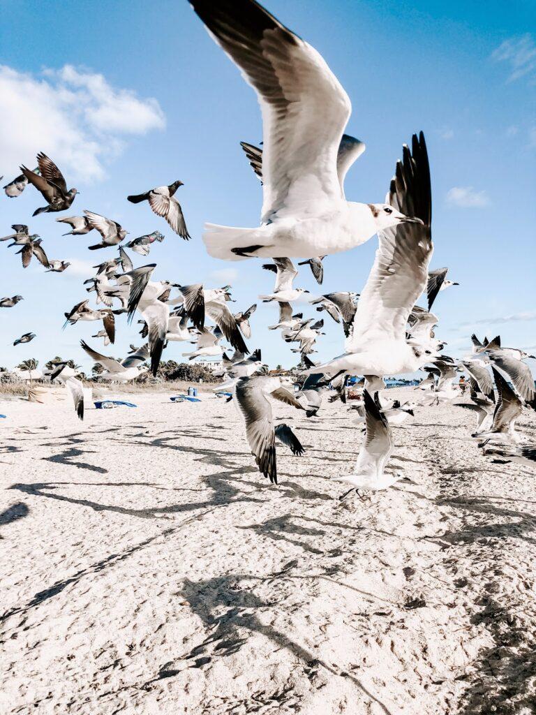 Una bandada de gaviotas volando sobre la orilla.