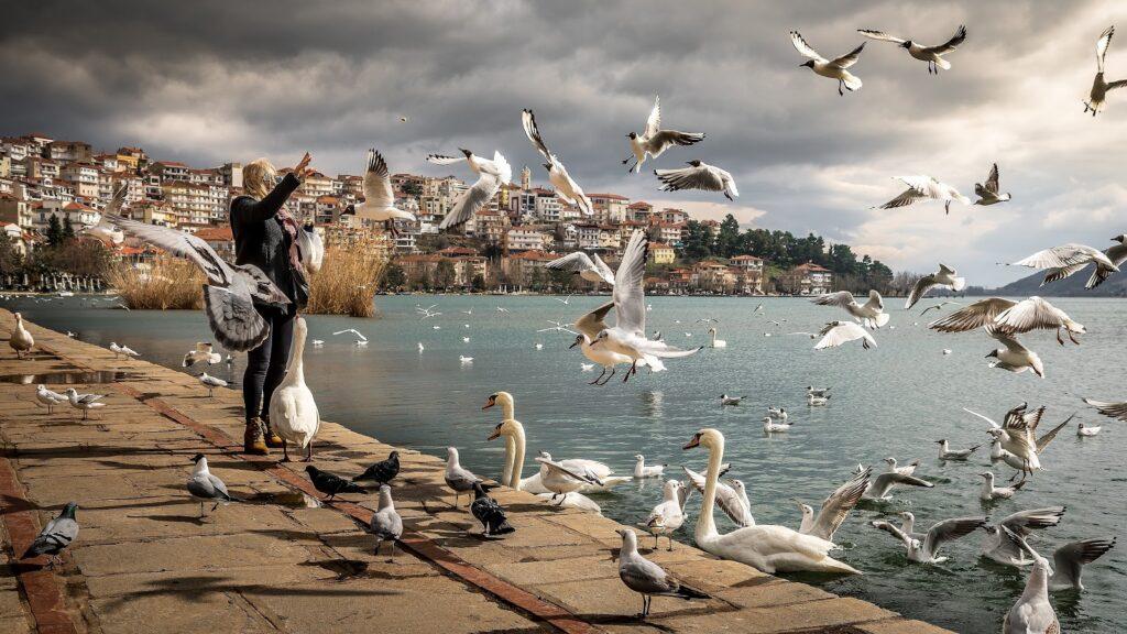Hombre alimentando pájaros en las costas