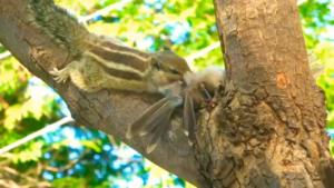 Ardilla comiendo un pájaro