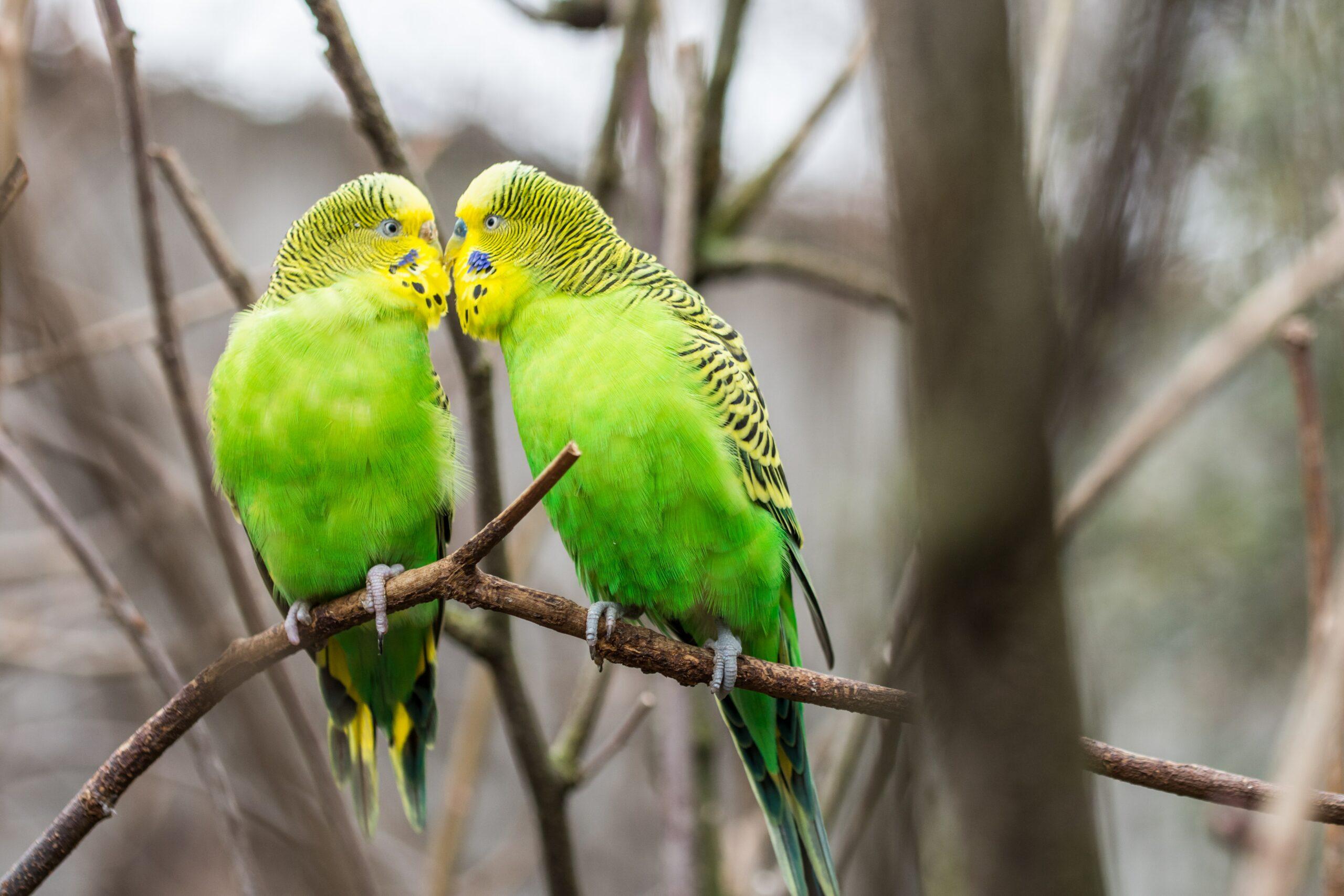8 magnificent green birds