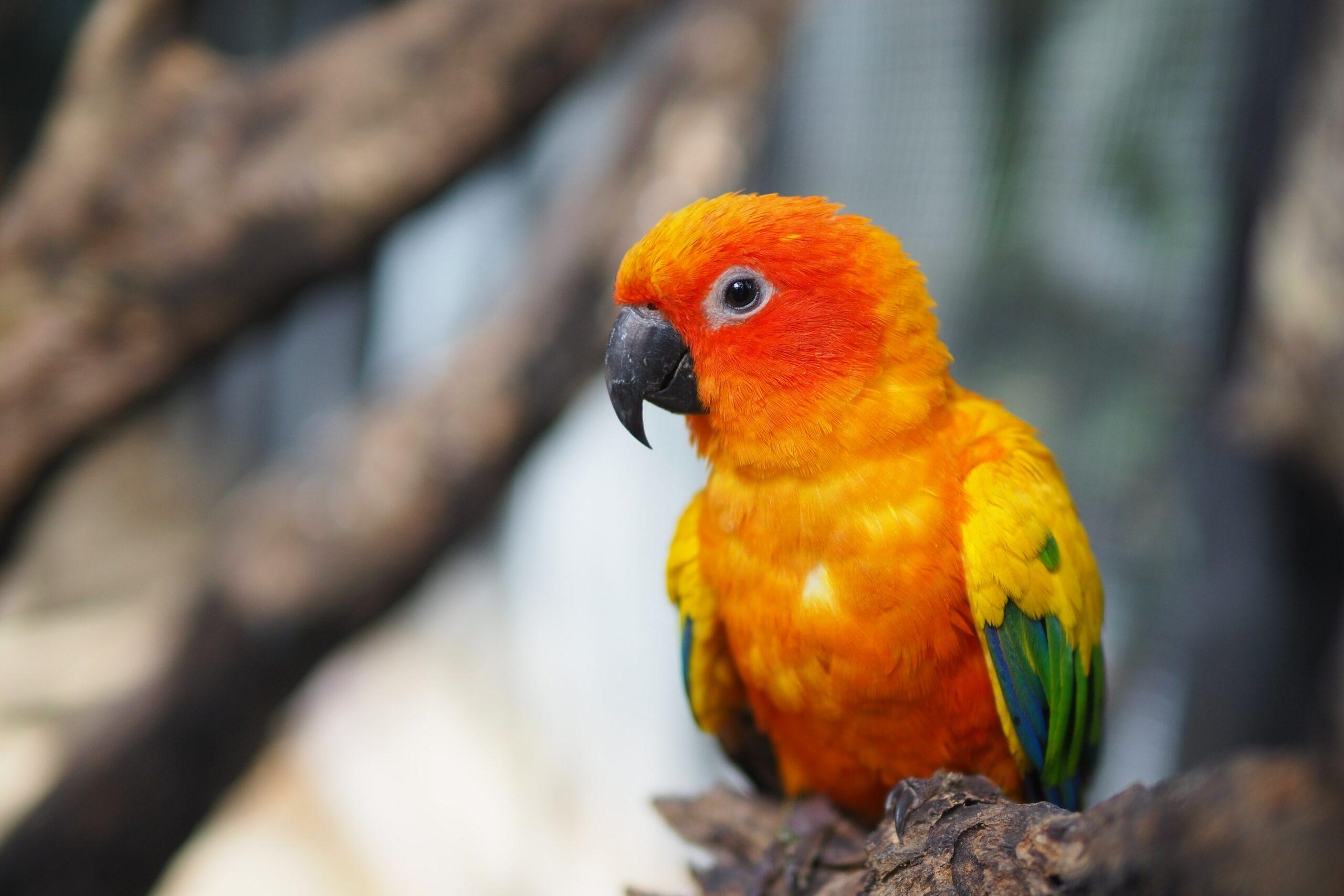 pájaro naranja-amarillo-andgreen en la rama de un árbol marrón