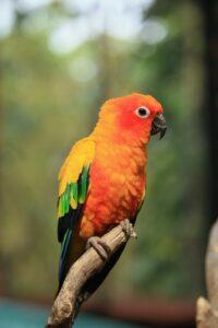 Jenday Conure bird setting on branch