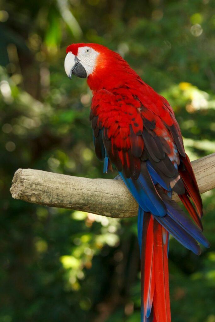 Hermoso pájaro guacamayo en rama