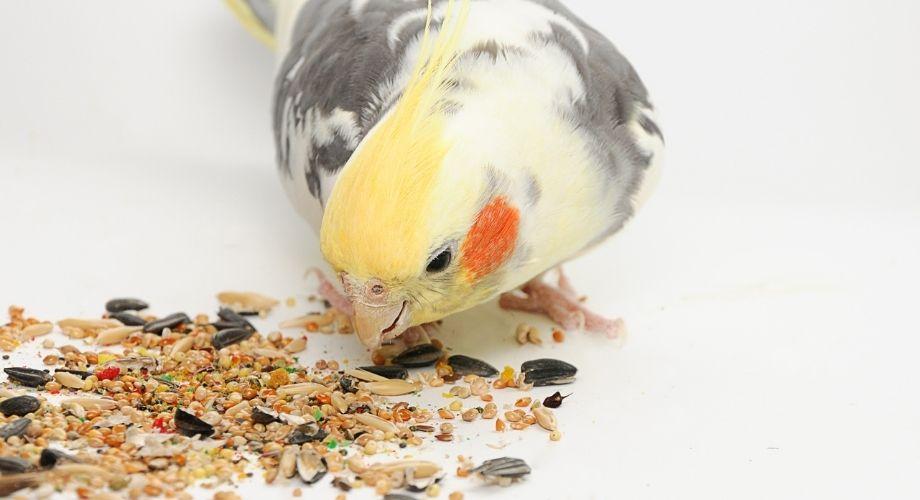 Pájaro comiendo comida