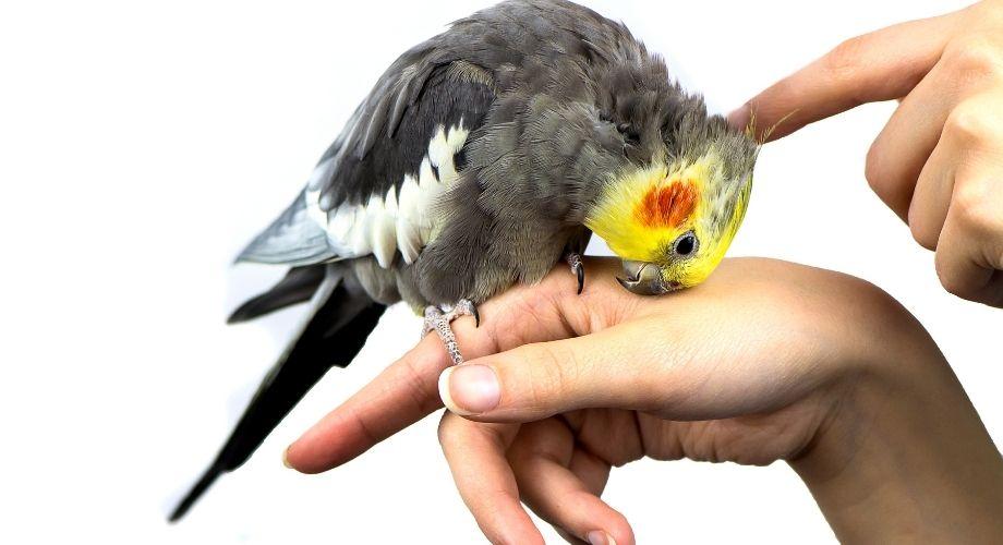 Dueño del pájaro abrazando al pájaro