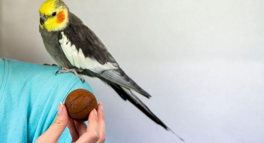 Dueño de pájaro jugando con su pájaro