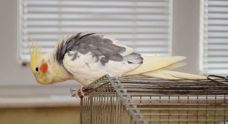 Configuración de pájaro sobre su jaula