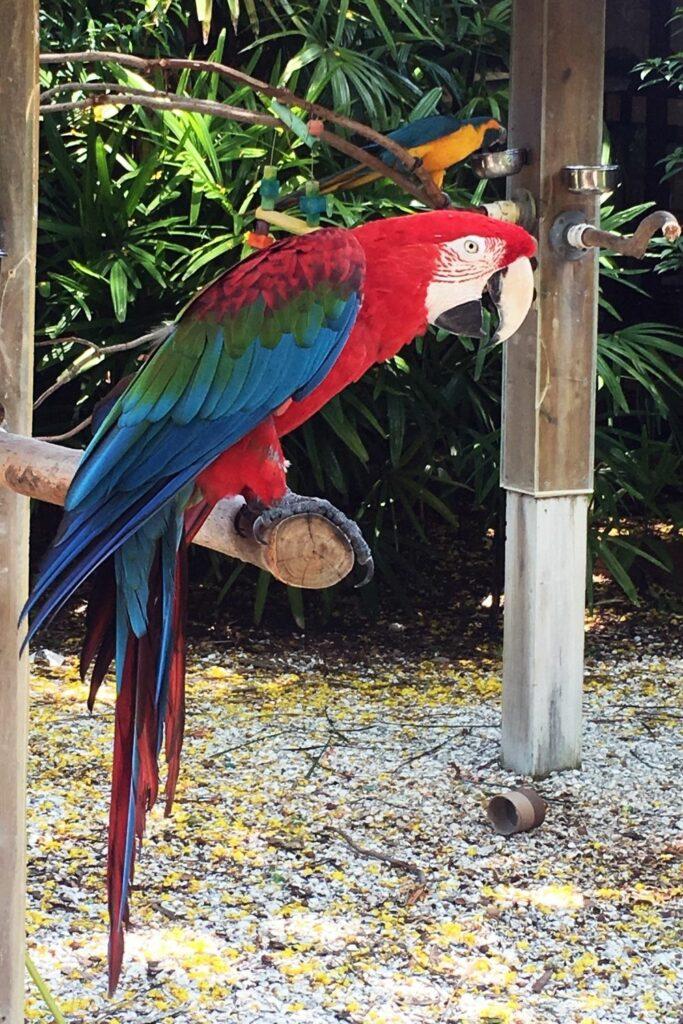 Pájaro guacamayo dentro de su jaula