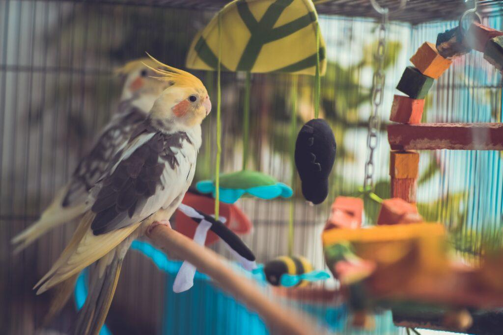 deux oiseaux assis sur une branche à l'intérieur de leur cage