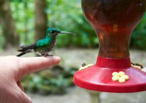 Hummingbird sitting on a persons finger