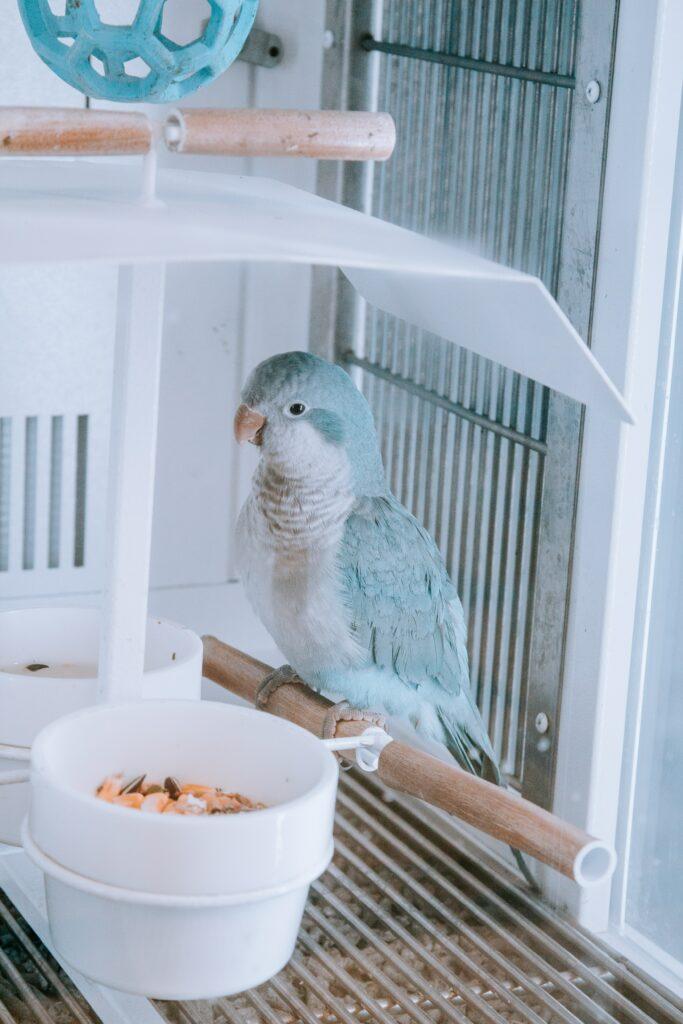 bel oiseau dans sa cage