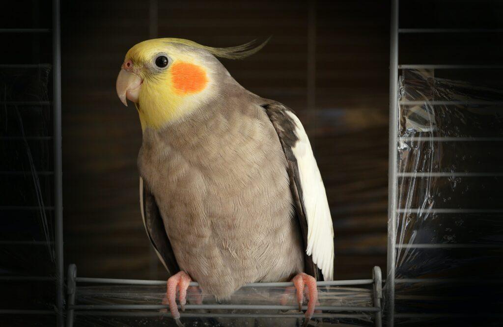 Oiseau tacheté d'orange