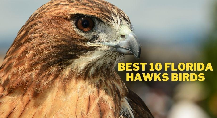 Les 10 meilleurs oiseaux de Floride Hawks