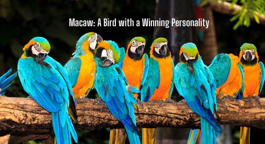 Ara : un oiseau à la personnalité gagnante
