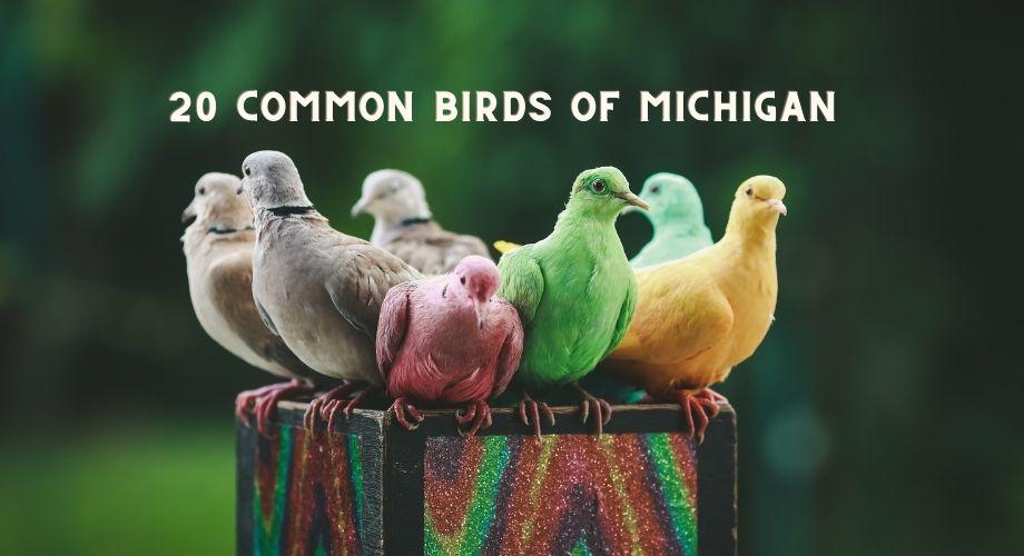 20 oiseaux communs du Michigan
