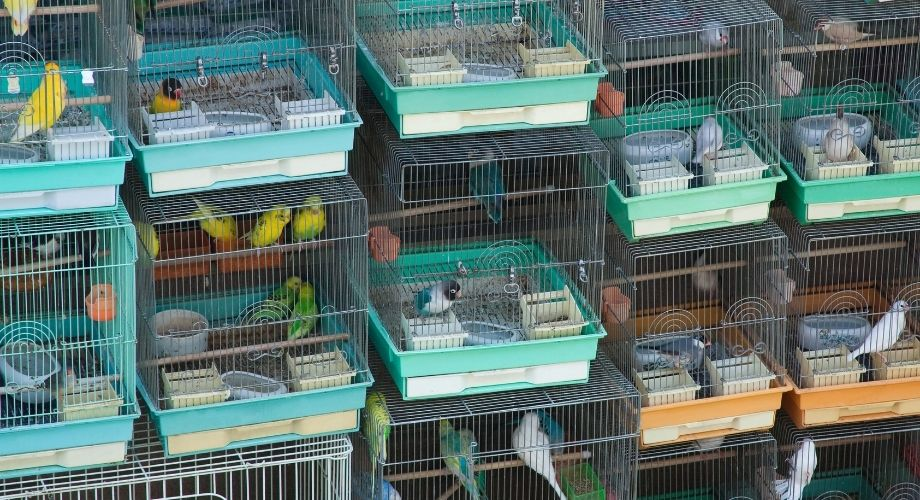 Cages à conures