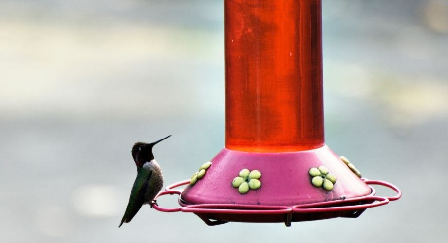 Alimentador de agua para pájaros
